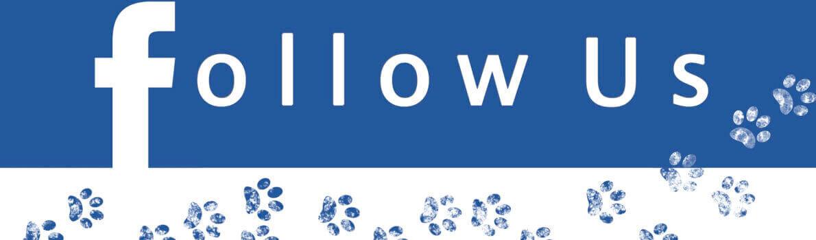 5 Consejos para conseguir y fidelizar seguidores en Facebook
